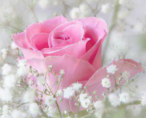 single-pink-rose-for-girl-first-birthday-thoughtful-gift-idea