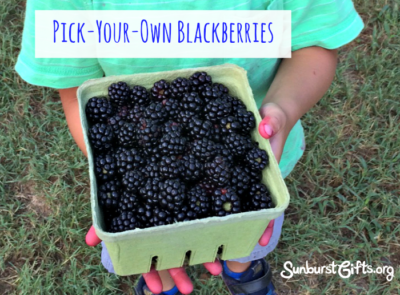pick-your-own-farm-blackberries-gift