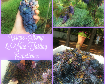grape-stomp-wine-tasting-vineyard-experience