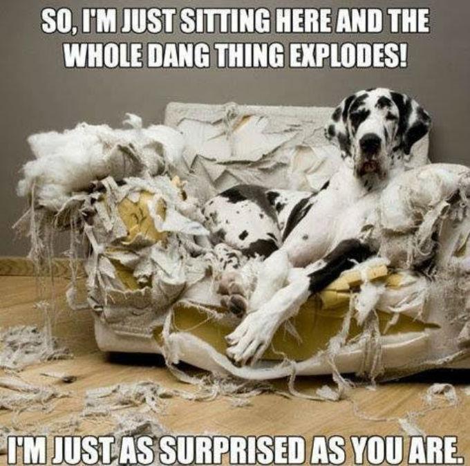 just-sayin-dog-explanation-thoughtful-gift-idea
