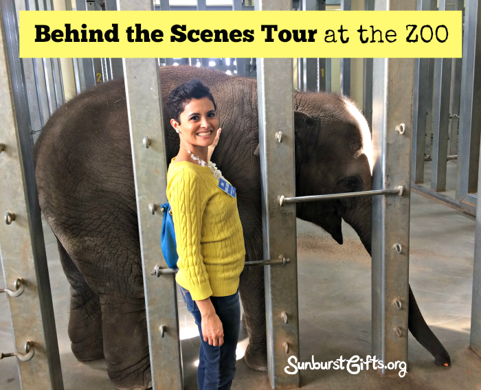 behind-scenes-tour-zoo-experience
