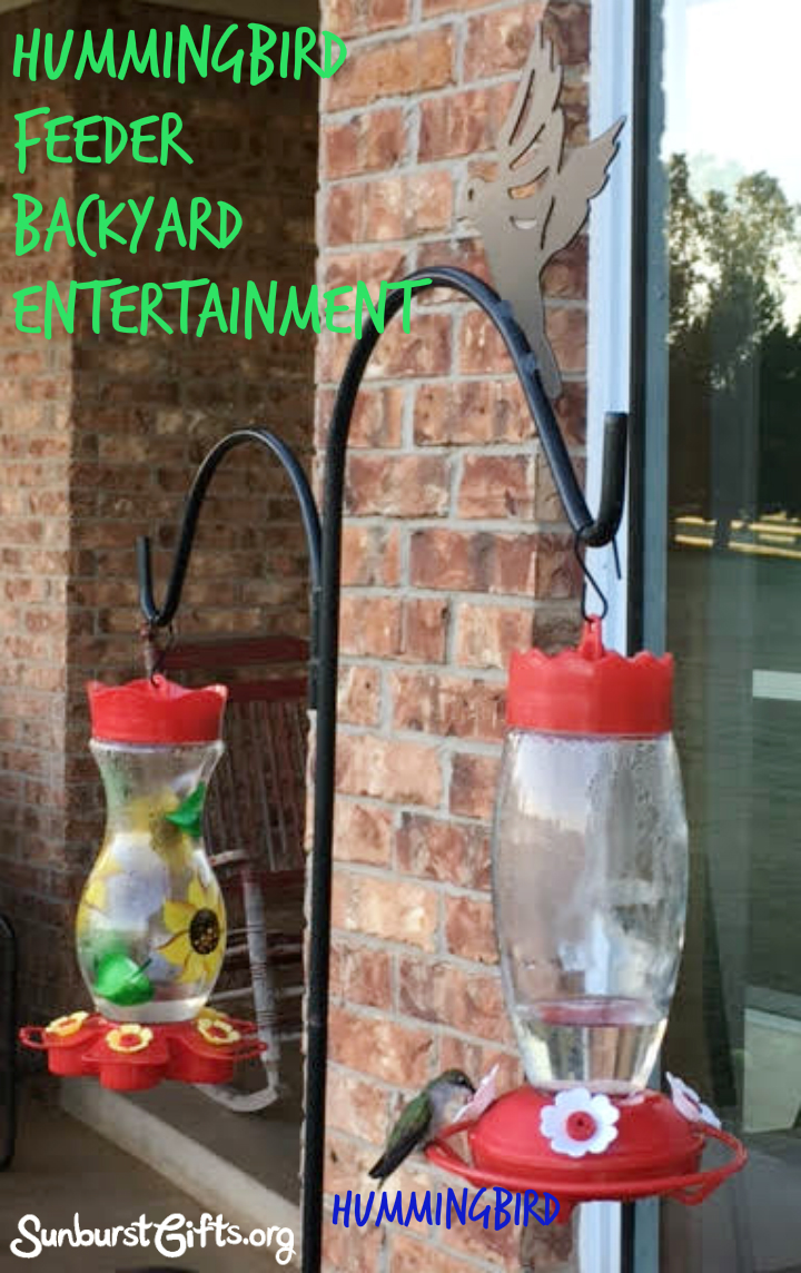 Hummingbird Feeder Backyard Entertainment Thoughtful