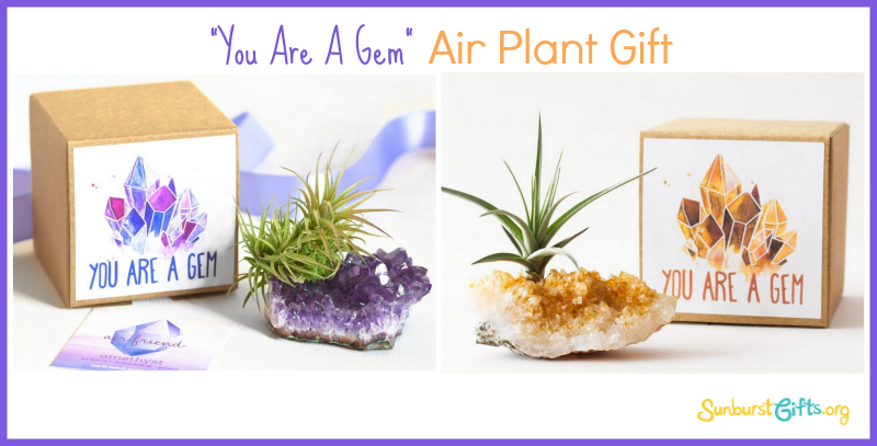 you-are-a-gem-air-plant-gift